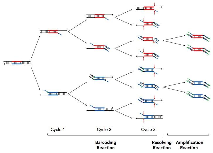 CleanPlex Amplicon based Unique Molecular Identifier or Barcode UMI Chemistry for Cancer Liquid Biopsy