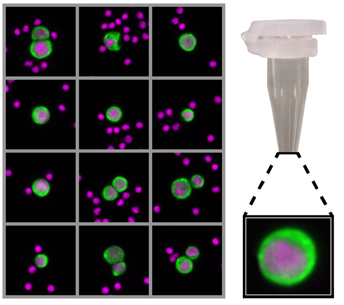 Rarecyte CTC picker