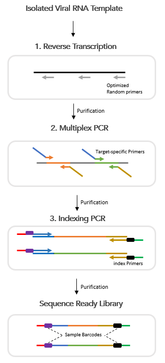 CleanPlex RNA SARS-CoV-2 Amplicon Sequencing library preparation and target enrichment workflow