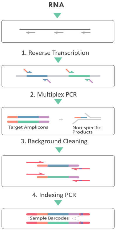 cleanplex RNA target enrichment and library preparation workflow