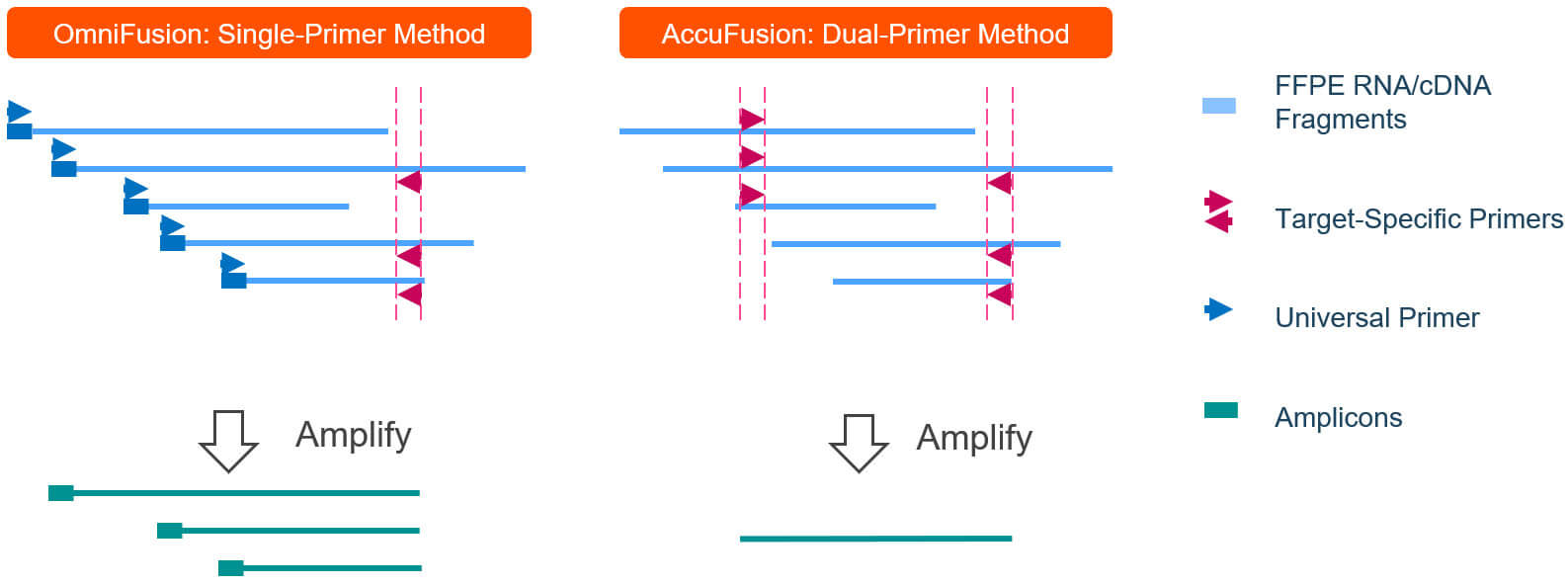 Targeted RNA fusion detection schematic