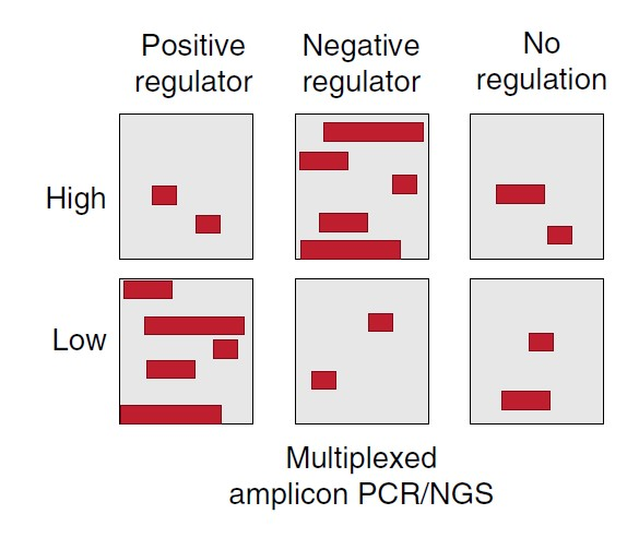 CRISPR Regulatory T Cells Gene Network