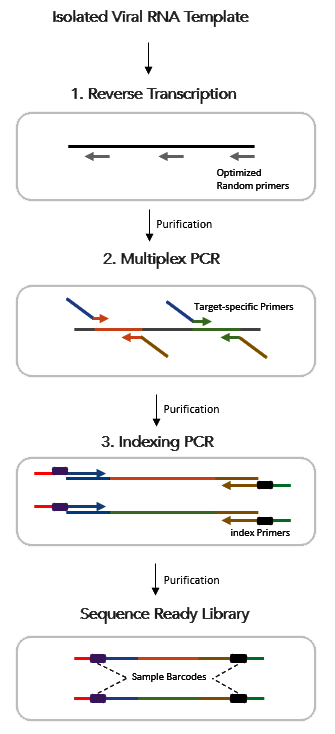 CleanPlex RNA COVID-19 SARS-CoV-2 Amplicon Sequencing library preparation and target enrichment workflow