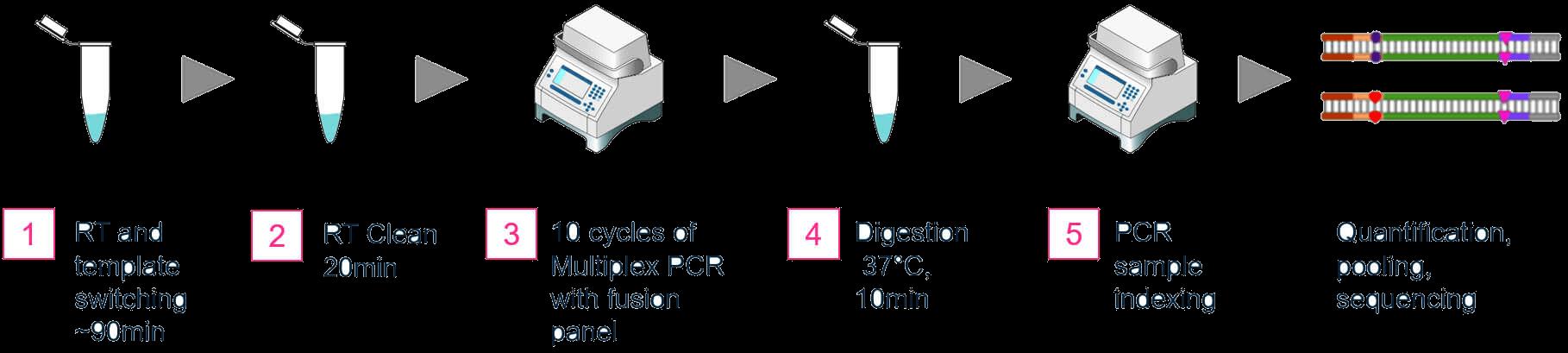 OmniFusion Single Primer Gene Fusion Detection Workflow