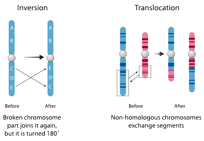gene fusions such as inversion and translocation