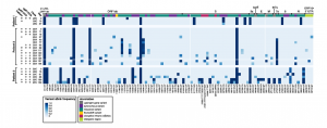 Accumulation of SARS-CoV-2 variants in three immunocompromised persistently positive young patients.